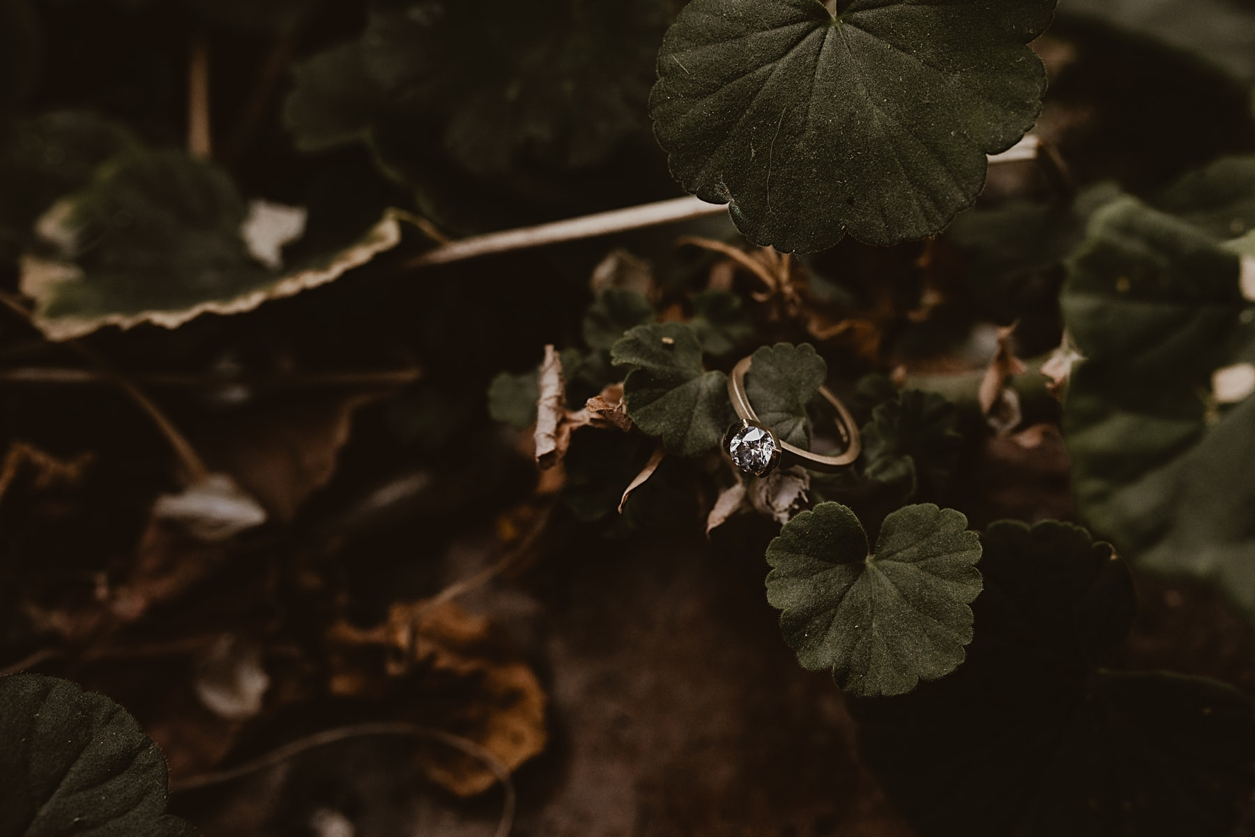 Wedding ring in foliage